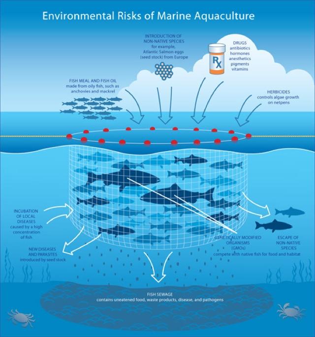 fish-farms_risks-of-aquaculture_inpost_credit-dr.george-pararas-carayannis