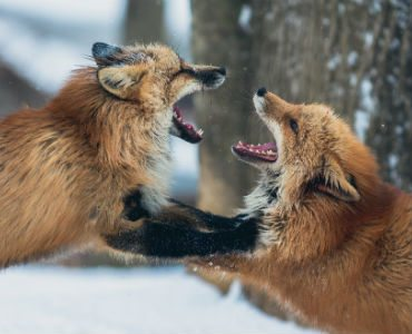 how to keep spark alive in relationships two snow foxes