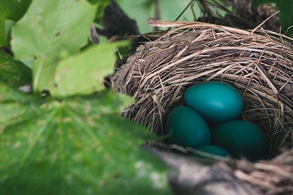 2-column-nest-egg