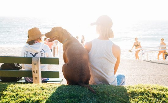 good habits woman sitting with dog on grass overlooking beach