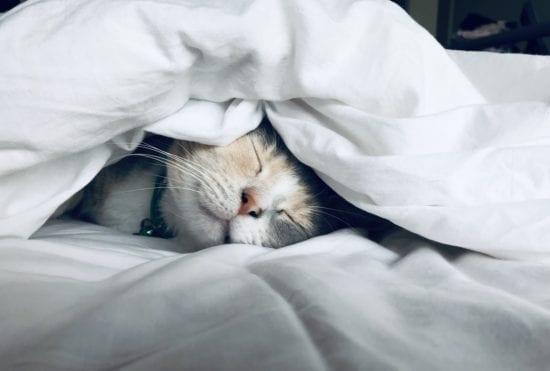 get plenty of sleep to feel happy